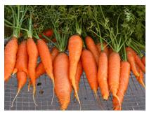 Manfaat Sayuran Wortel untuk Penderita Diabetes